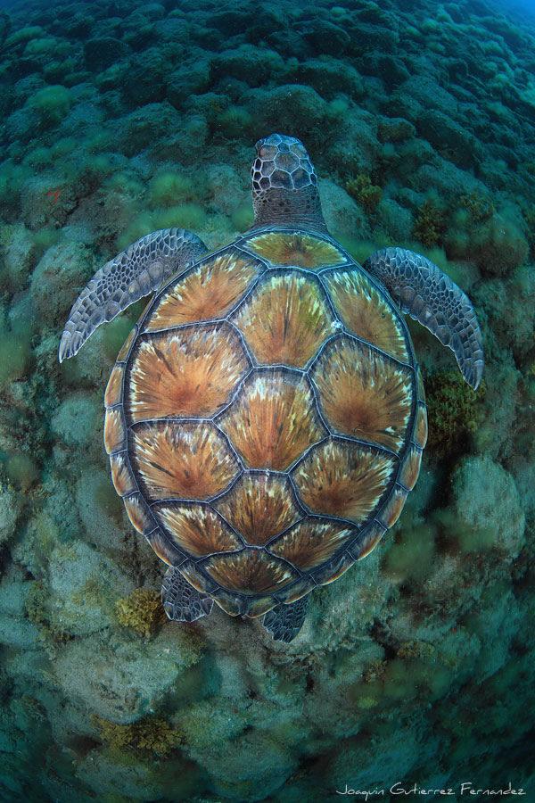 turtlebyjoaquingutierrezfernandez